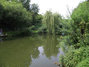 Golden Pond Fishery Willow